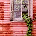 Window Of Ivy by Andrew Giovinazzo