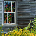 Window Of Olson House by Sharon M Connolly