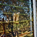 Window Reflection by Gina O'Brien