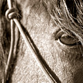Window To The Soul by Christine Hauber