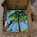 Window Tree by Roger Mullenhour