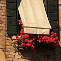 Window With Flowers In Venice by Michael Henderson