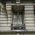 Windows Of Paris by Nancy Taylor