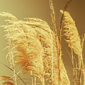 Windswept Autumn Brush Grass by Jorgo Photography - Wall Art Gallery