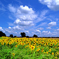 Windswept Field And Sky by Gina Signore