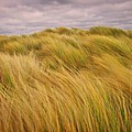 windswept Grasses by Martyn Arnold