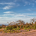 Windswept Landscape Of Oaks And Prickly Pear Cacti Atop Enchanted Rock - Fredericksburg Texas  by Silvio Ligutti