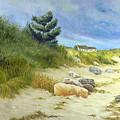 Windswept Sands by Tony Scarmato