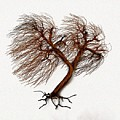Windswept Tree Wall Sculpture 2 by Omer Huremovic