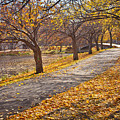 Windswept Walk by Susan Cole Kelly