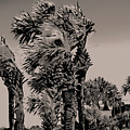 Windy Day At Beach by Gina O'Brien