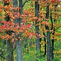 Windy Day Autumn Colors by Frozen in Time Fine Art Photography