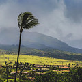 Windy Day In Maui by Andy Konieczny