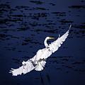 Windy Flight by Francisco Gomez
