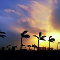 Windy Morning by Atullya N Srivastava