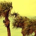 Windy Palms by Susanne Van Hulst