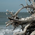 Windy Sea by Rosalie Scanlon