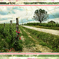Wine And Roses. Brandini Winery by Jennie Breeze