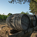 Wine Barrels At Vineyard by Nicole Freedman