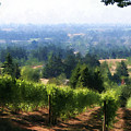 Wine Country by Sherrie Triest