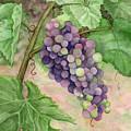 Wine Grapes by Lorrisa Dussault