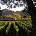 Wine Train Through The Trees by Heather Bethke