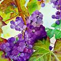 Wine Vine by Karen Fleschler