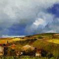 Wine Vineyard by Brandon Hunter