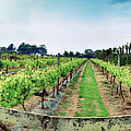 winery panorama on Jersey Island by Ariadna De Raadt