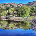 Winery Pond Reflections by Norman Andrus