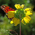 Wing Flower by Peg Urban