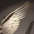 Wing by Nikola Ralevic