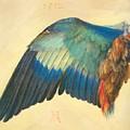 Wing Of A Blue Roller 1512 by Durer Albrecht