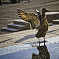 Winged Bird by Madeline Ellis