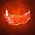 Winged Heart by Casper Cammeraat