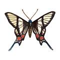 Winged Jewels 4, Watercolor Tropical Butterflie Black White Red Spots by Audrey Jeanne Roberts