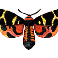 Winged Jewels 5, Watercolor Moth Black Yellow Orange And Red Tropical by Audrey Jeanne Roberts