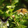 Wings And Blooms by Debbie Oppermann