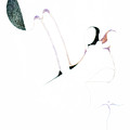 Wings by James Lanigan Thompson MFA