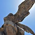 Wings by Lori Leigh