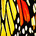 Wings Of A Monarch Butterfly Abstract by Carol F Austin