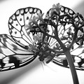 Wings Of Scented Lace by Karen Wiles