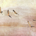 Wings Over New Mexico II by Leda Robertson