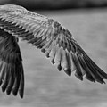 Wings Over Water Beach Pictures Black And White Seagull by Al Nolan