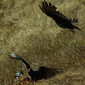 Wings Spread Wide by JoAnn SkyWatcher
