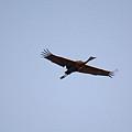 Wings Stretched by Linda Kerkau