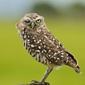 Winking Owl by Bradford Martin