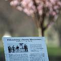Winona Minnesota Friendship Cherry Blossoms Plaque by Kari Yearous