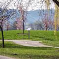 Winona Minnesota Path With Cherry Blossoms by Kari Yearous