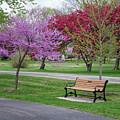 Winona Mn Bench With Flowering Tree By Yearous by Kari Yearous